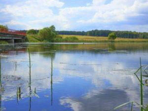 Лес, пруд, природа, рыбалка, отдых